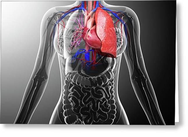 Human Cardiovascular System Greeting Card by Pixologicstudio