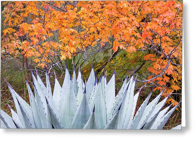 Usa, Texas, Guadalupe Mountains Greeting Card