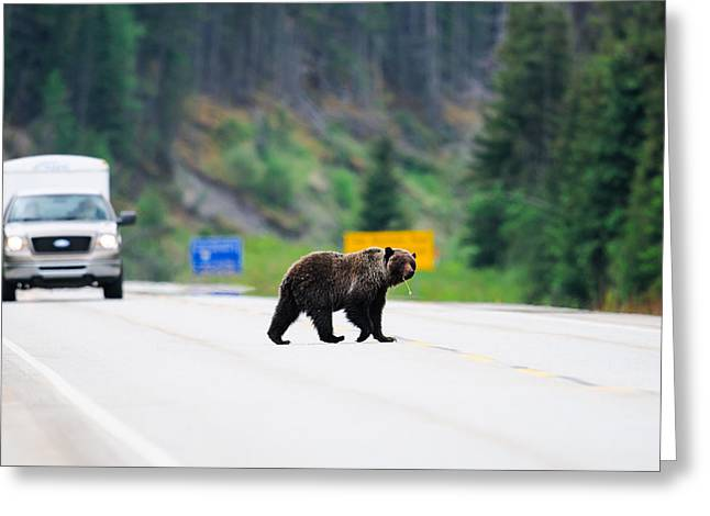 Animal crossing greeting cards page 12 of 13 fine art america grizzly bear m4hsunfo