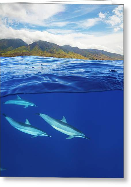 A Split View Of Spinner Dolphin Greeting Card