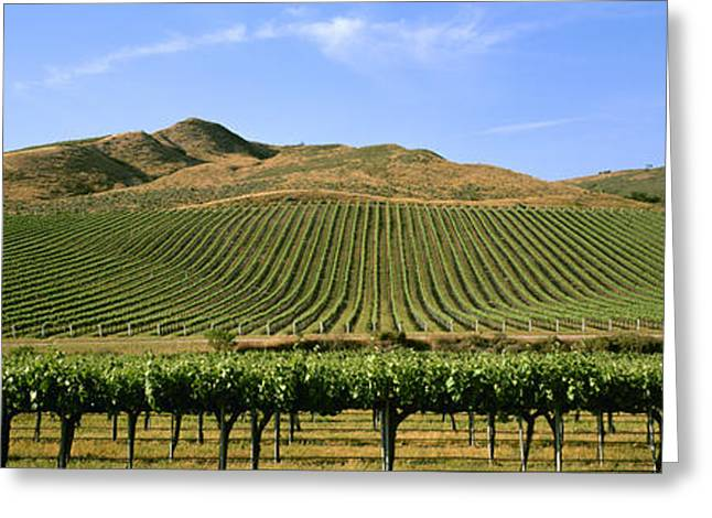 Agriculture - A Hillside Wine Grape Greeting Card by Timothy Hearsum