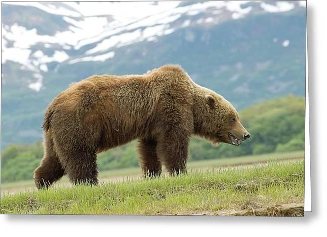 Alaska Wilderness Greeting Card