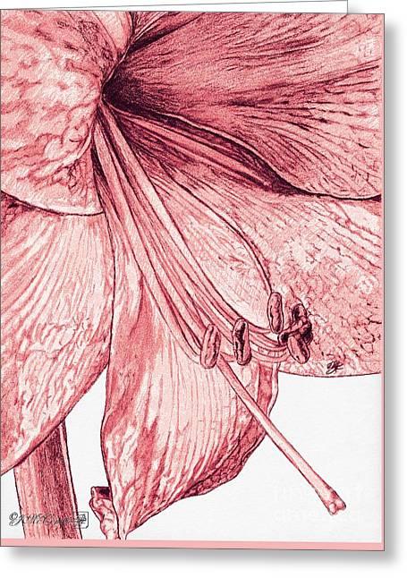 Amaryllis Greeting Card by J McCombie