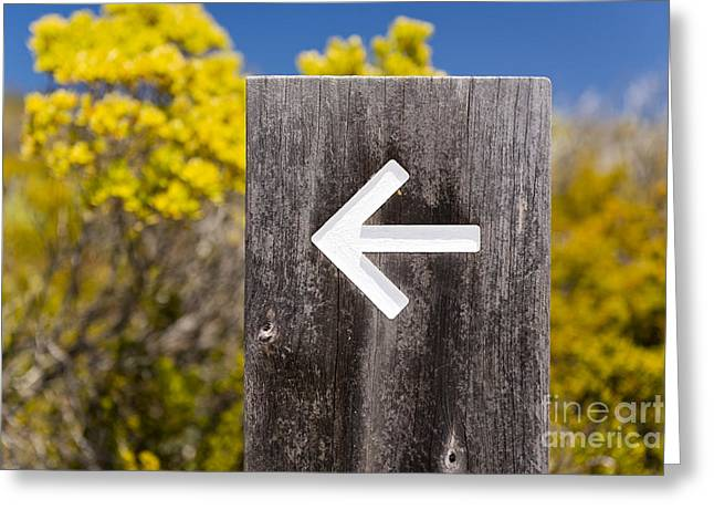 Guide post greeting cards page 2 of 2 fine art america arrow signs greeting card m4hsunfo