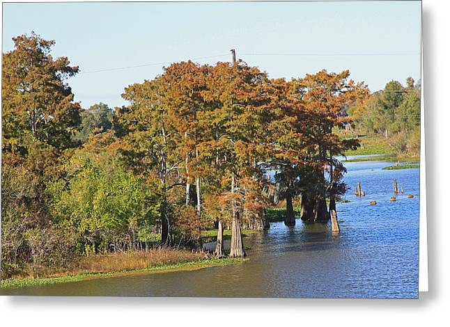 Atchafalaya Basin In Louisiana Greeting Card