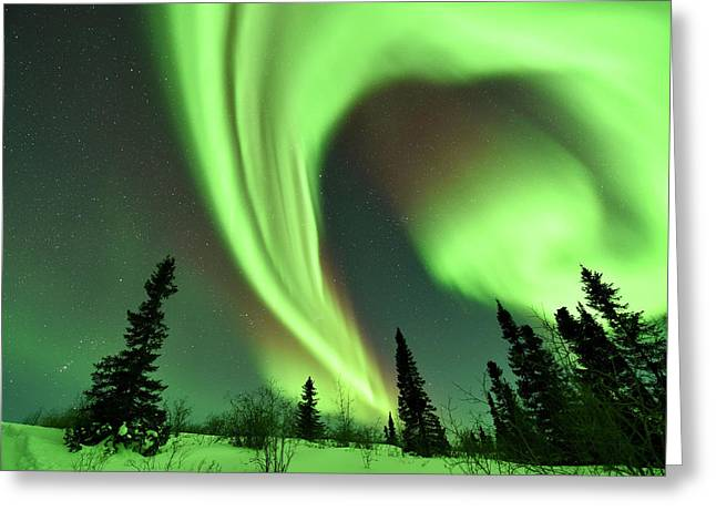 Aurora Borealis Over Trees Greeting Card by Dr P. Marazzi