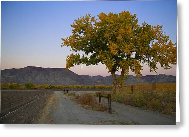 Autumn Moonset Greeting Card by Jim Snyder