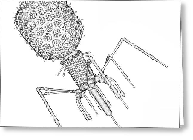 Bacteriophage T4 Greeting Card