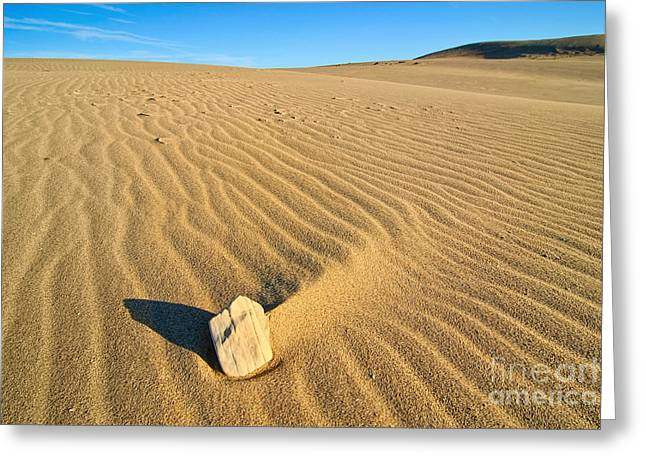 Beautiful Sand Dunes Of The Rancho Guadalupe Dunes Preserve In California Greeting Card by Jamie Pham
