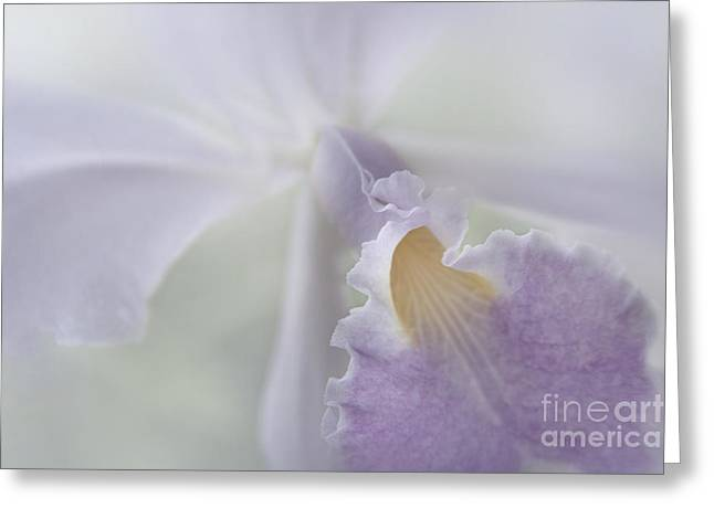 Beauty In A Whisper Greeting Card by Sharon Mau
