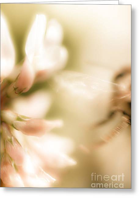 Bee Gone Greeting Card by Jorgo Photography - Wall Art Gallery