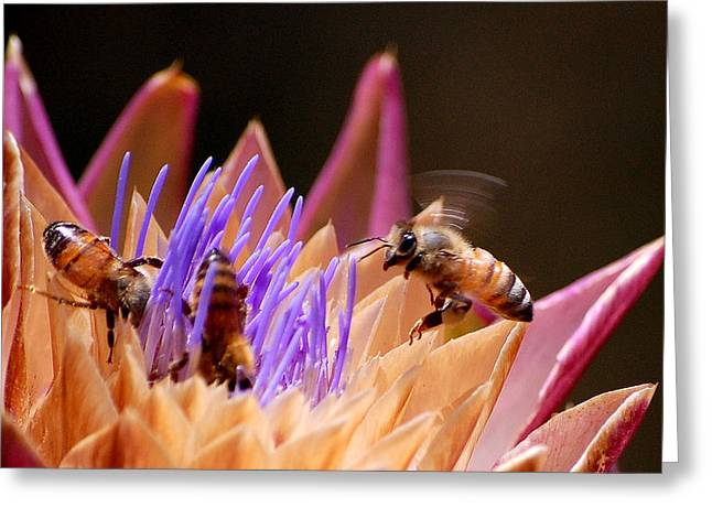 Greeting Card featuring the photograph Bees In The Artichoke by AJ  Schibig