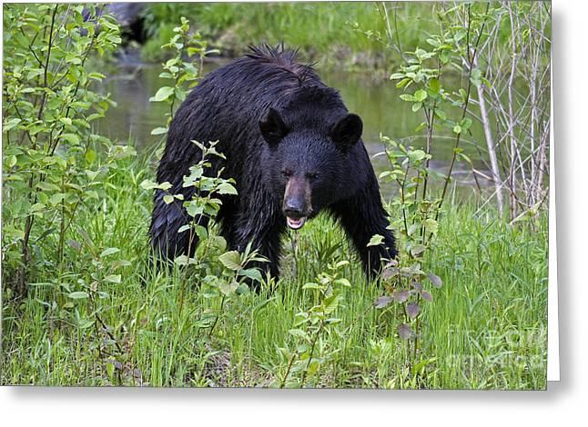 Black Bear Greeting Card by Linda Freshwaters Arndt
