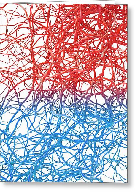 Blood Vessels Greeting Card by Maurizio De Angelis