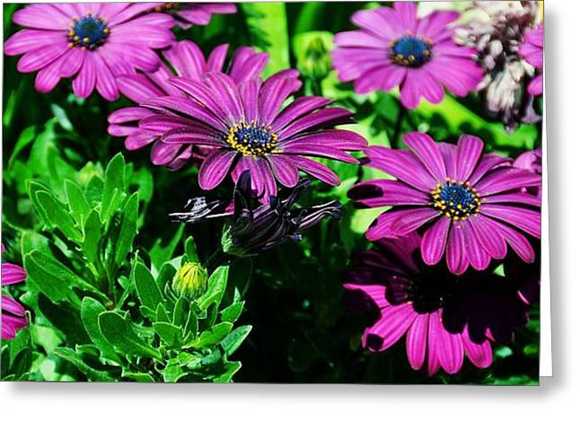 Blooms In Bloom Greeting Card by JAMART Photography