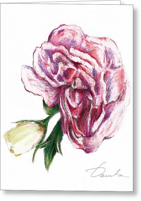Pink Blossoms Drawings Greeting Cards - Blossom Greeting Card by Danuta Bennett
