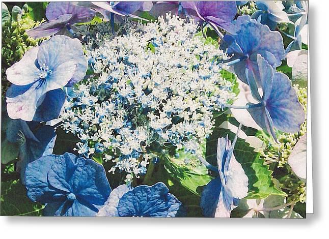 Blue Hydrangea Greeting Card by Shan Ungar