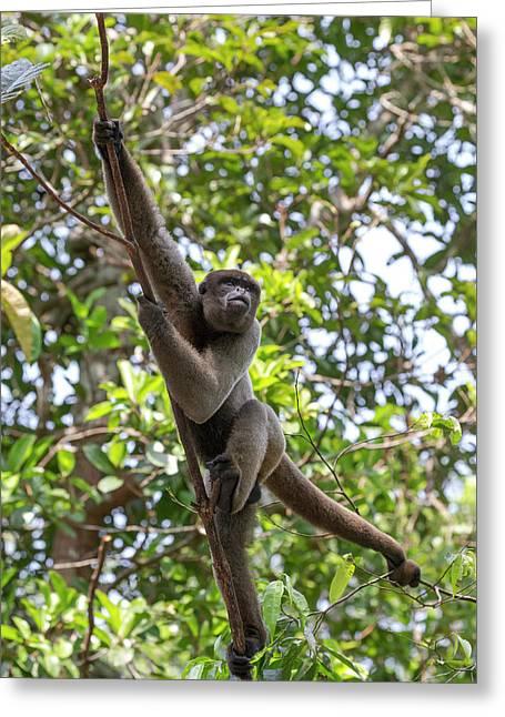 Brazil, Amazon, Manaus, Amazon Ecopark Greeting Card