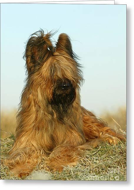 Briard Dog Greeting Card by Jean-Michel Labat