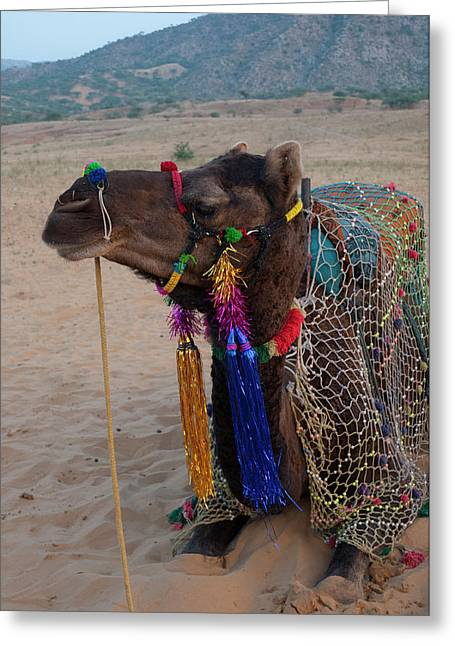 Brightly Decorated Camel, Pushkar Greeting Card by Inger Hogstrom