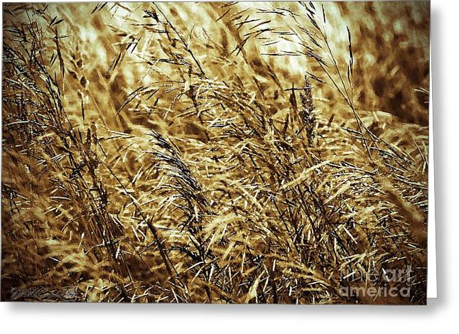Brome Grass In The Hay Field Greeting Card by J McCombie