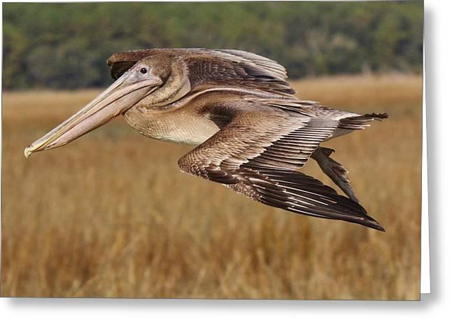 Brown Pelican Greeting Card by Paulette Thomas