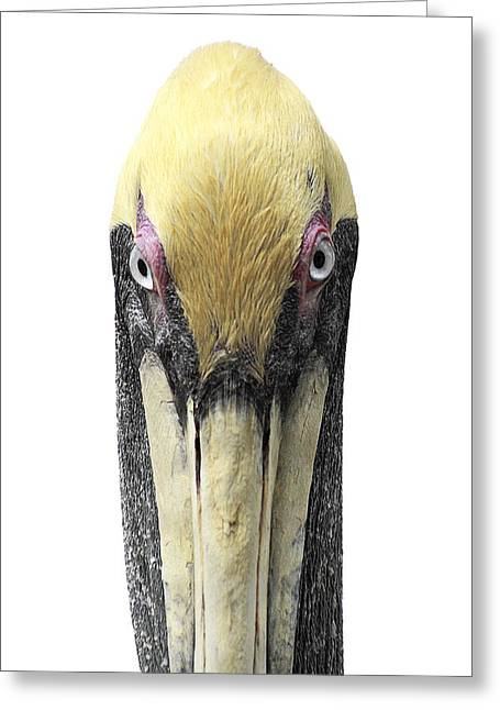 Brown Pelican-2 Greeting Card