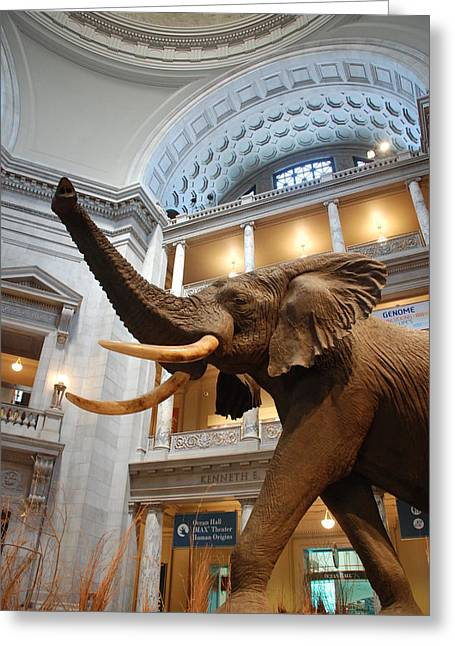 Bull Elephant In Natural History Rotunda Greeting Card