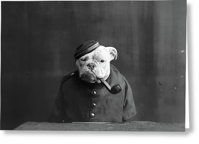 Bulldog, C1905 Greeting Card by Granger