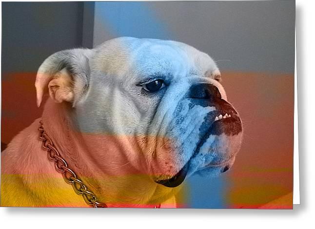 Bulldog  Greeting Card by Marvin Blaine