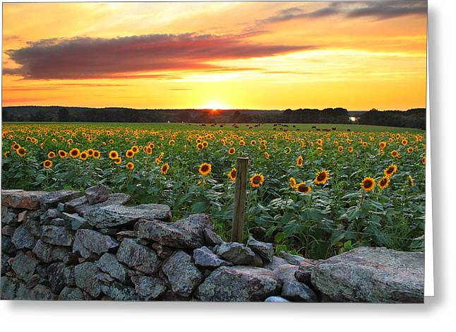 Buttonwood Farm Greeting Card