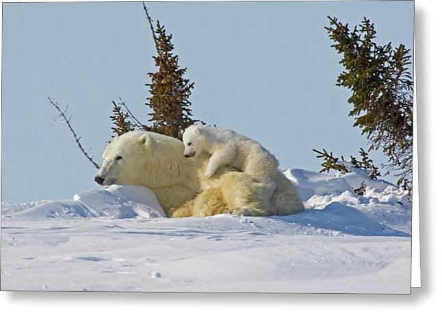 Canada, Manitoba, Wapusk National Park Greeting Card by Jaynes Gallery