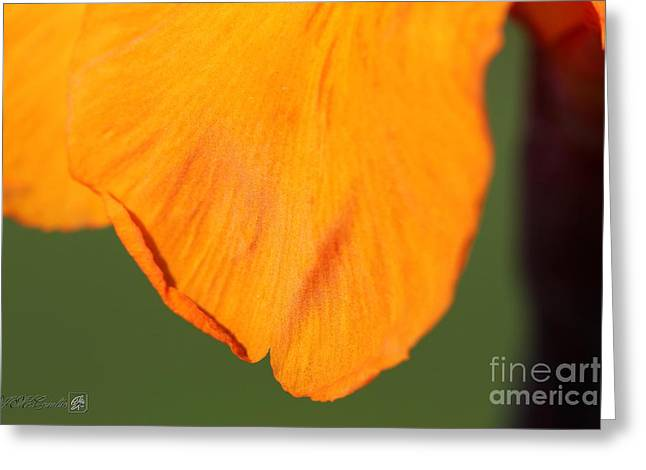 Canna Lily Named Wyoming Greeting Card by J McCombie