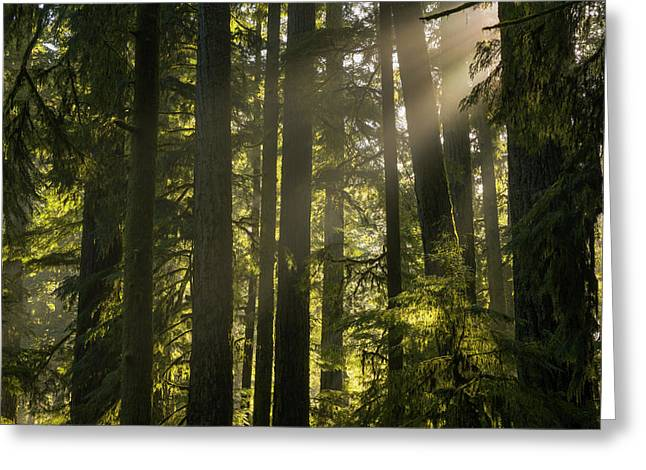 Cathedral Grove, Macmillan Provincial Greeting Card by Robert Postma