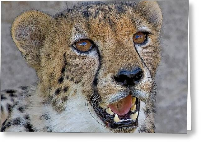 Cheetah Portrait Greeting Card by Larry Linton