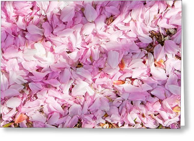 Cherry Blossom Greeting Card by Tom Gowanlock