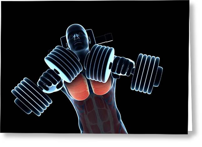 Chest Muscles Of A Weightlifter Greeting Card by Sebastian Kaulitzki