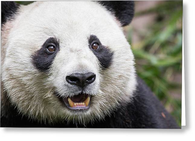 China, Sichuan Province, Chengdu, Giant Greeting Card by Paul Souders