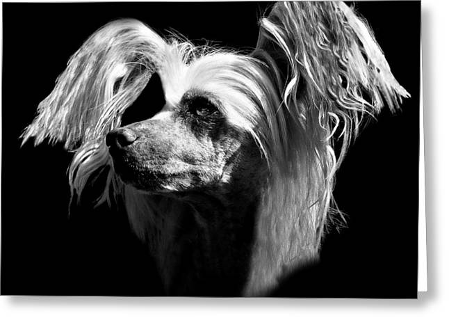 Chinese Crested Hairless Greeting Card by Diana Angstadt