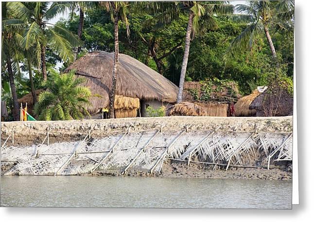 Coastal Flood Defences In The Sunderbans Greeting Card by Ashley Cooper