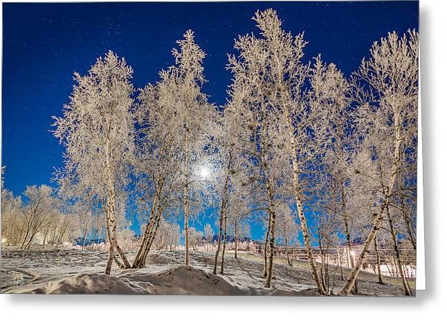 Cold Winter In Lapland Sweden Greeting Card by Panoramic Images