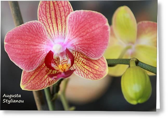 Colourful Orchid Greeting Card by Augusta Stylianou