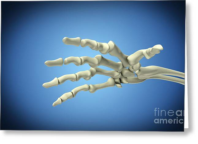 Conceptual Image Of Bones In Human Hand Greeting Card by Stocktrek Images
