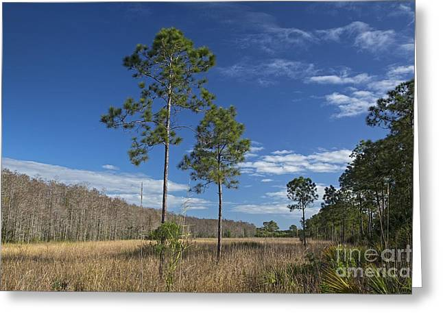 Corkscrew Swamp Greeting Card