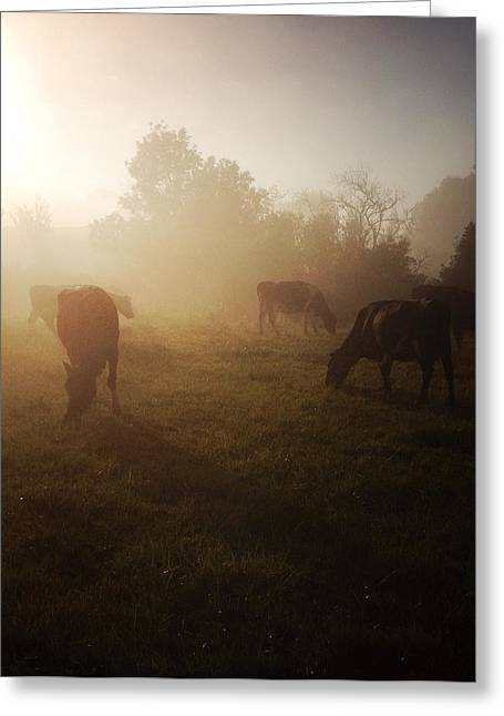 Cows Greeting Card by Les Cunliffe