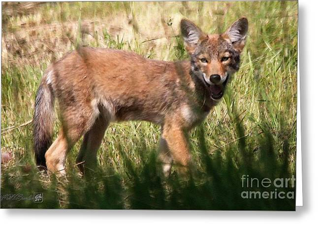 Coyote Greeting Card by J McCombie
