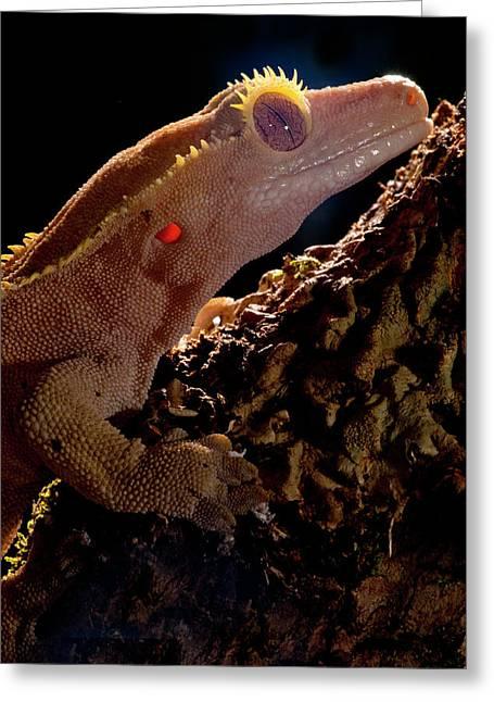 Crested Gecko, Rhacodactylus Ciliatus Greeting Card