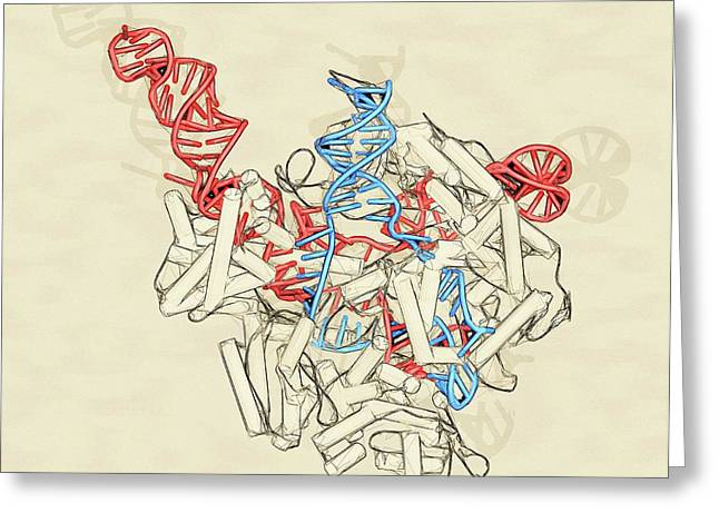 Crispr-cas9 Gene Editing Complex Greeting Card