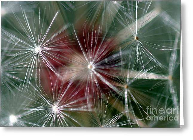 Greeting Card featuring the photograph Dandelion Seed Head by Henrik Lehnerer