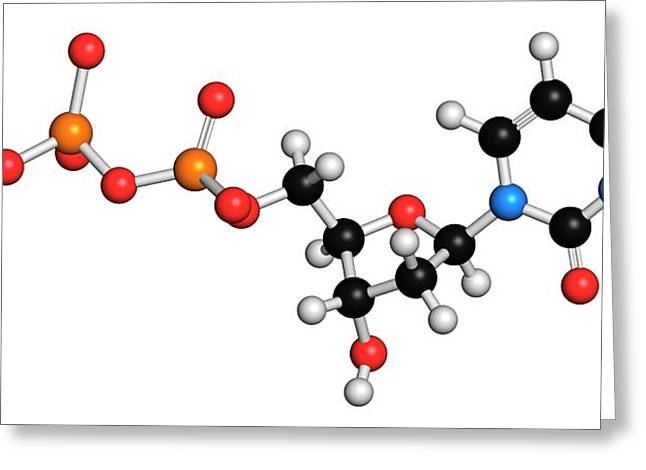 Deoxycytidine Triphosphate Molecule Greeting Card by Molekuul